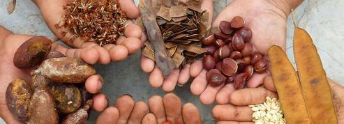 Forest Finance France ouvre le capital de sa filiale de cacao équitable