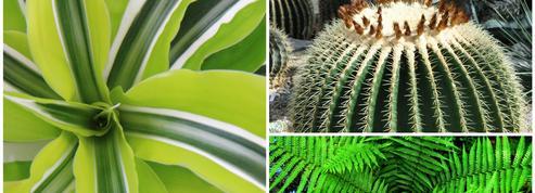 Plongée dans l'univers graphique des plantes vertes