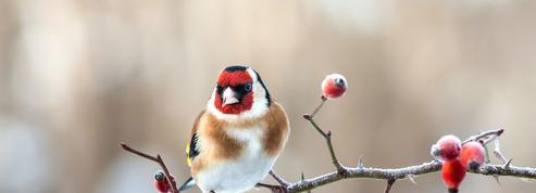Jardin: bien connaître les oiseaux pour mieux les protéger