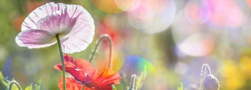 Jardin: préparez une «couche chaude» pour le printemps