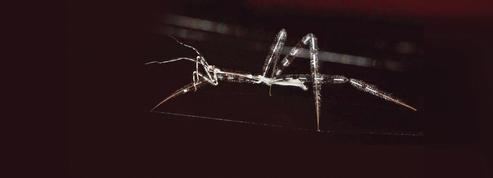 Les secrets de la punaise tueuse d'araignées