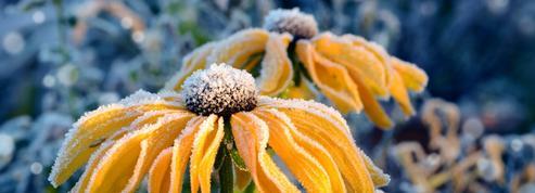 Noël au jardin: l'hiver en pente douce