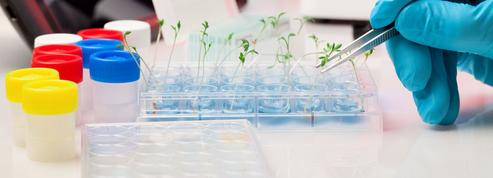 Trop de conflits d'intérêts dans la recherche sur les OGM?