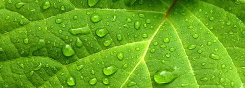Air liquide se renforce dans les… cosmétiques