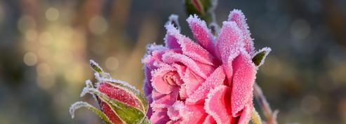 Jardin: comment empêcher vos plantes de geler