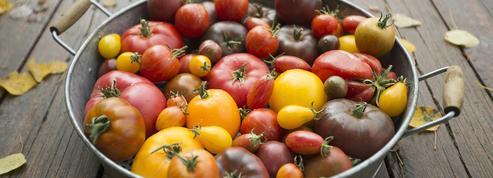 Comment redonner leur goût aux tomates industrielles