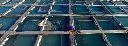 Les dérives de l'aquaculture pointées du doigt