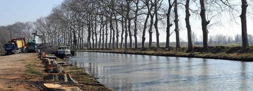 Canal du Midi: 3,3 millions d'euros de dons pour sauver les platanes