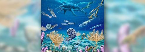 Ces fabuleux fossiles qui réécrivent l'histoire des extinctions de masse