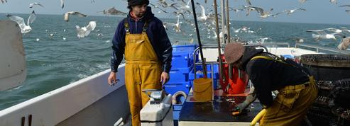 Contre la surpêche, il vend des poissons «oubliés» ultra-frais