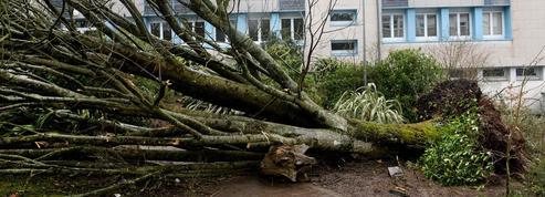 Comment se faire indemniser après une tempête?