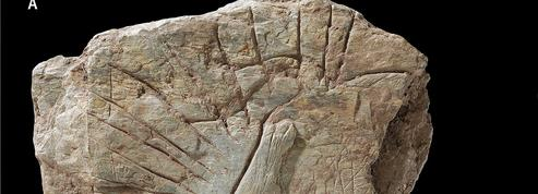 Découverte d'un incroyable trésor préhistorique à Plougastel-Daoulas