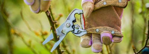 Jardin: comment bien tailler ses rosiers