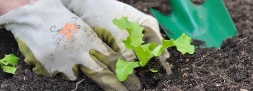 Potager : comment bien réussir ses semis et plantations