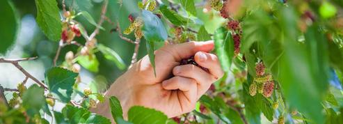 Une carte collaborative pour ramasser des fruits gratuitement