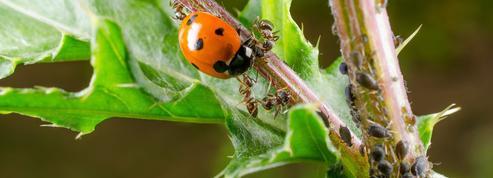 «Jardinez-vous !» : comment protéger les plantes sans pesticides ?