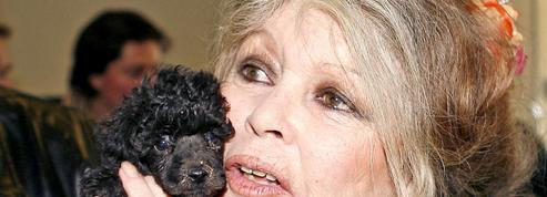 Brigitte Bardot appelle «ceux qui aiment les animaux» à ne pas voter Macron