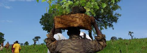 Au Kenya, reboisement et rentabilité vont de pair