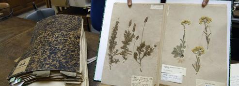 Un herbier vieux de 200 ans détruit par les douanes australiennes