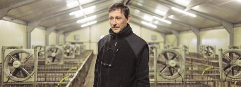 Grosse déprime chez les éleveurs et les producteurs de foie gras