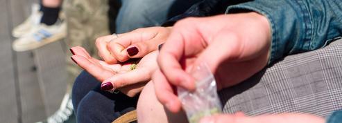 Le cannabis influence les résultats scolaires