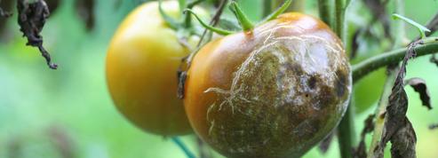 «Jardinez-vous !» : comment lutter contre les maladies sans pesticides ?