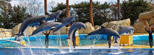 Vers la fin programmée des delphinariums