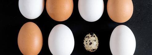La forme de l'œuf, une histoire d'ailes