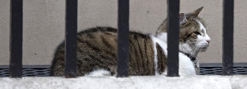 Aude : les 200 chats retrouvés morts auraient été victimes d'un virus