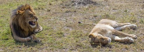 L'inquiétant déclin de la vie animale