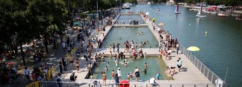 Algues et petits poissons : les premiers baigneurs du bassin de La Villette conquis