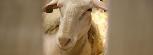 Le parrainage d'animaux, une solution pour soutenir économiquement les éleveurs ?