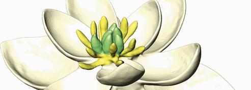 Portrait de la mère ancestrale des fleurs