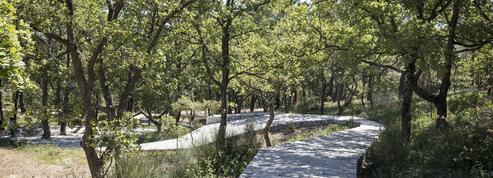 Ai Weiwei hors les murs en Provence