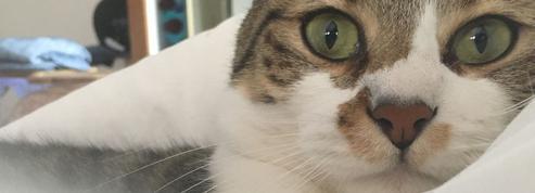 Var : six mois de prison ferme pour avoir tué un chat