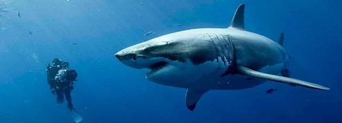 47 meters down ,les requins dans les filets de l'horreur