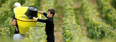 La production de vins chute en France