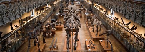 Archéologie: l'homme moderne nouveau est arrivé