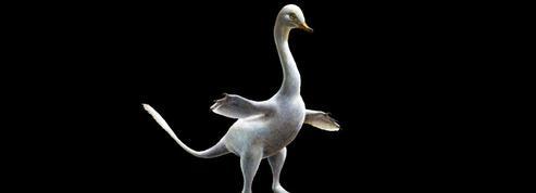 Un étrange dinosaure «nageur» au cou de cygne et aux griffes de raptor