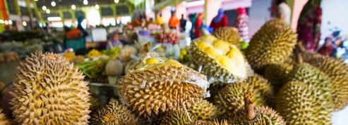 Les gènes qui puent chez le durian