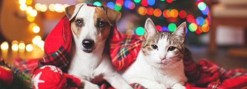Les chiens et les chats plus exposés à l'empoisonnement au chocolat pendant les fêtes