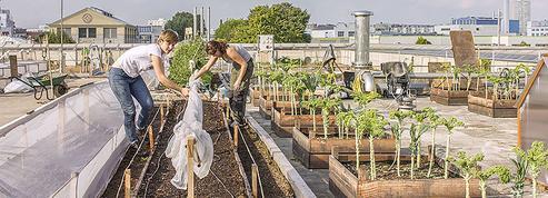 Les vertus insoupçonnées des jardins suspendus