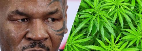 Mike Tyson se lance dans la culture de cannabis