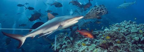 Les changements climatiques risquent d'affecter les ressources sous-marines