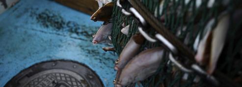 «La pêche électrique est une innovation régressive»