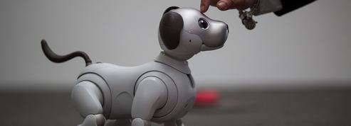 Robots et intelligence artificielle s'imposent dans notre quotidien