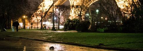 Heureux comme un rat à Paris