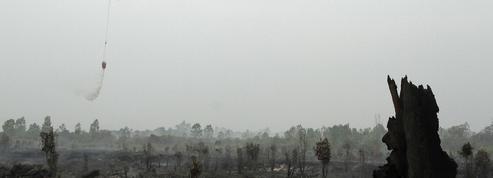 Huile de palme : Greenpeace dénonce l'opacité de 8 grandes marques