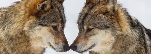 Quand les animaux dévoilent leurs sentiments