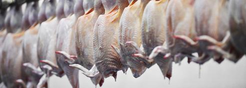 Les poulets de Loué volent au secours de ceux de Doux